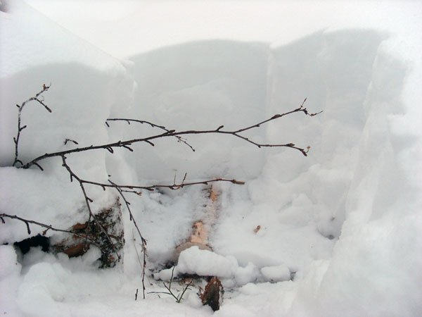 phoca-thumb-l-skog10