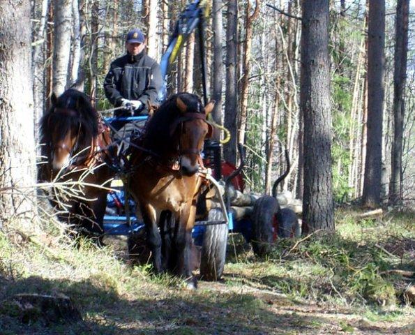 phoca-thumb-l-skog3