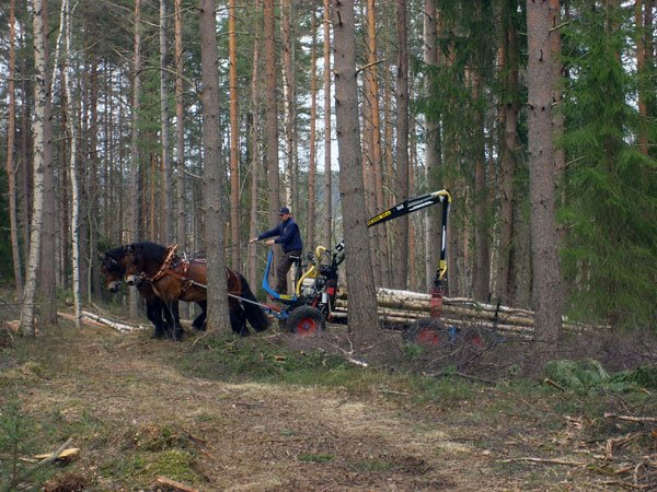 phoca-thumb-l-skog4