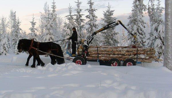 phoca-thumb-l-skog9